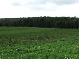 В Зеленоградском округе разбили яблоневый сад на месте зарослей борщевика