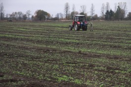 Калининградские аграрии начали сажать картофель и другие овощи