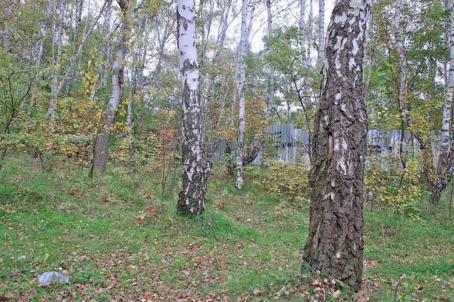 Двоих пропавших вкалининградских лесах грибников ищут милиция иволонтеры