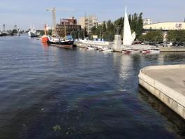 Под Эстакадным мостом в Калининграде появилось большое масляное пятно