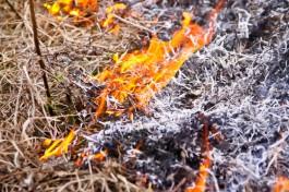 МЧС: За сутки в Калининградской области зафиксировано 66 случаев возгорания травы