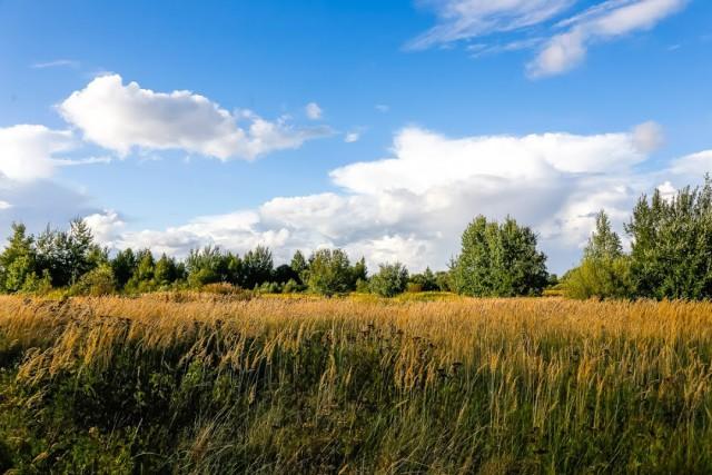 Власти Зеленоградска возвращают 9,4 га земли под коттеджный посёлок возле моря за неуплату аренды