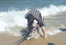В Светлогорске выбросило на берег моря рыбу-меч