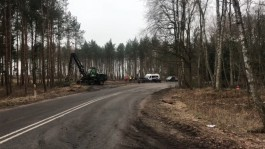 Польша начала вырубать деревья на Вислинской косе для строительства канала