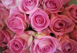 В Калининградскую область пытались ввезти заражённые розы из Кении