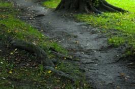 Мэрия планирует в течение месяца подписать соглашение с меценатом на благоустройство парка Теодора Кроне