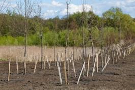 Власти Калининграда решили бороться с «должниками» по компенсационному озеленению