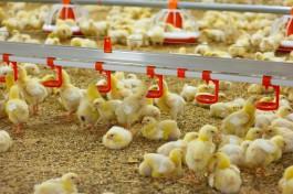 Роспотребнадзор предупредил о вспышке птичьего гриппа в Польше