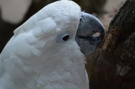 Калининградский зоопарк: Во время похищения какаду до крови заклевал вора
