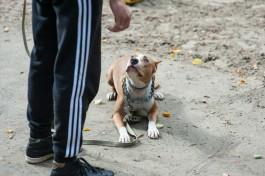 Пострадавшая от нападения собаки жительница Правдинска отсудила 100 тысяч рублей