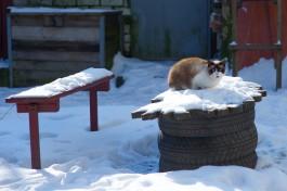 Географ БФУ: Снежного покрова до конца декабря в Калининградской области ожидать не стоит