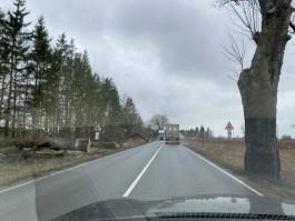 На трассе Калининград — Балтийск вырубают придорожные деревья