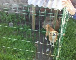 Под Черняховском мужчина построил вольер для собаки из краденых дорожных ограждений