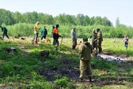 На месте санитарной вырубки в Черняховском лесничестве высадили шесть тысяч дубов