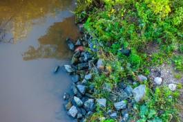Власти Калининграда планируют до конца лета почистить ручей в сквере за ТЦ «Акрополь»