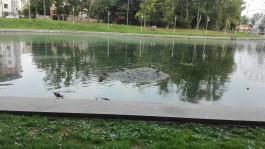 О чудовищном состоянии Верхнего озера в Калининграде