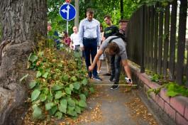 Кропоткин о вековых деревьях в Центральном районе: Они сожрали тротуары полностью