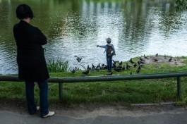 В Калининграде на три месяца обмелеет Нижнее озеро
