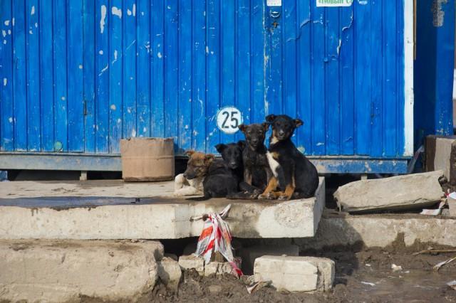 Гражданин Калининграда убил собаку остену, чтобы отомстить собственной приятельнице