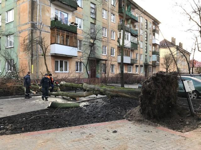 Засутки сильный ветер повалил вКалининграде практически 50 деревьев