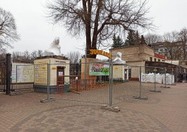 «Поедут в ящике, как Чебурашка»: в Калининграде демонтировали скульптуры львов на входе в зоопарк