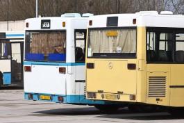 За неделю полицейские оштрафовали в Калининградской области 79 водителей автобусов
