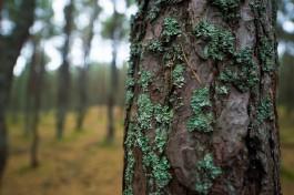 Власти ввели круглосуточное наблюдение за лесами региона из-за пожарной опасности