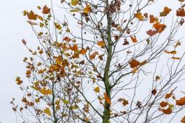 На пяти улицах Калининграда высадят 38 деревьев и больше тысячи кустарников