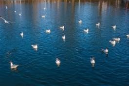 Администрация Калининграда запретила купаться на городских водоёмах