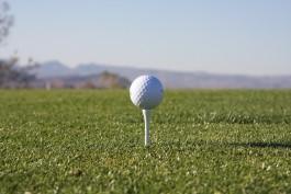 Инвестор гольф-клуба получит около 200 га земли в бывшем совхозе «Светлогорский»