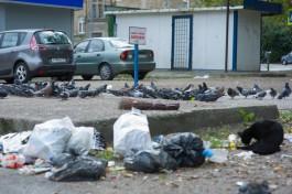 «Диверсия или окурки»: почему в Калининграде часто горят мусорные площадки