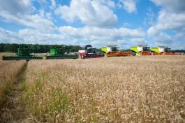Власти ожидают самый высокий в истории Калининградской области валовой сбор зерновых