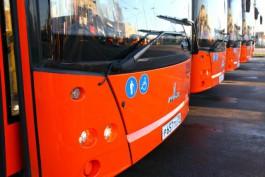 Власти Калининграда не планируют покупать ещё 100 автобусов МАЗ в 2017 году