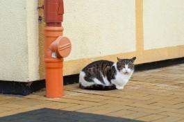 В начале марта пройдёт фестиваль «День рождения зеленоградского кота»