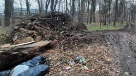 В Калининграде лесопарк в начале улицы Гагарина очистят за 1,7 млн рублей