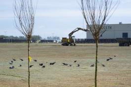 Птицы склюют весь газон вокруг нового стадиона на Острове