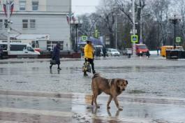 В Калининграде бродячие собаки повредили два автомобиля, пытаясь достать кошку