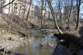 Калининградский зоопарк начал благоустройство сквера в районе улицы Руставели