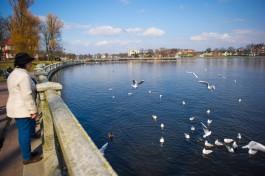 «Фестиваль бигоса, птицы и выставка ретротехники»: 5 способов провести выходные
