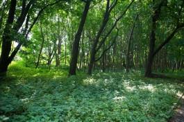 В Славском округе разыскивают грибника, пропавшего 15 сентября