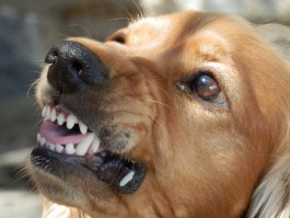 В Калининграде на 23-летнюю девушку напала бездомная собака