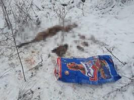 Под Калининградом нашли пакет с расчленённой собакой