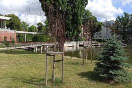 На озере Поплавок в Калининграде засохла часть высаженных полтора года назад деревьев
