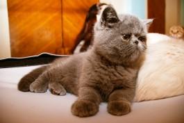 В Калининградской области планируют создать приют для кошек-доноров