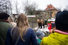 Калининградский зоопарк с польским музеем выиграли 2 млн евро на комплекс вольер животных Сибири и Дальнего Востока