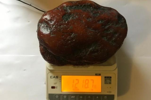 В Калининградской области добыли янтарный самородок весом 1,2 кг