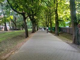 Дятлова пообещала благоустроить Фестивальную аллею в Калининграде