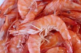В Калининград не пустили 38 тонн креветки из Эквадора