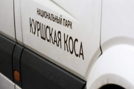Власти Зеленоградска просят калининградцев не ездить на Куршскую косу в выходные