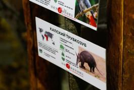 В зоопарке Калининграда для трубкозуба построили новый вольер